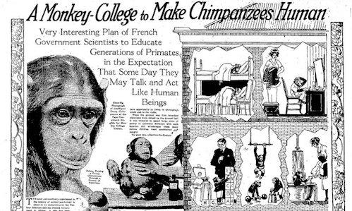 Monkey_college-