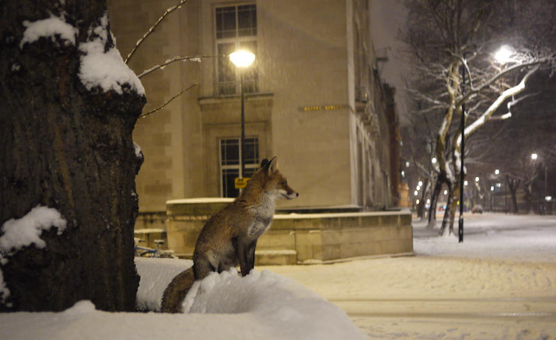 Fox_malet_street_london-