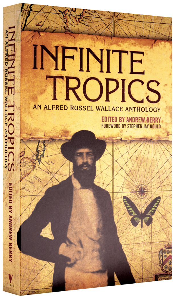 Infinite-tropics-1050st